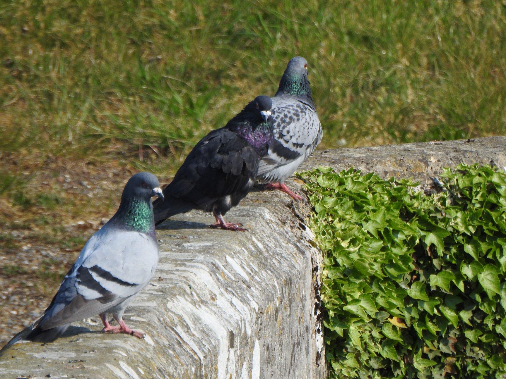 Feral Birds...