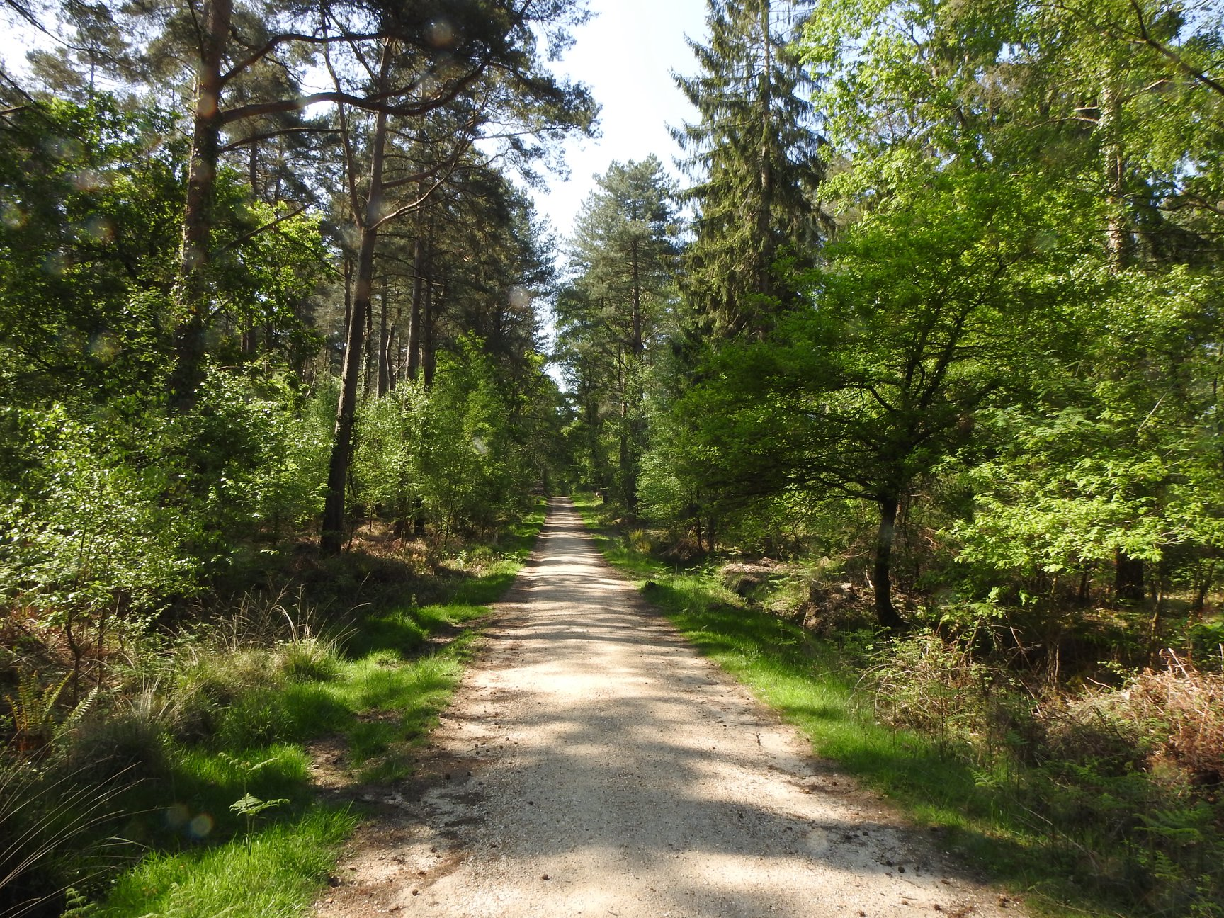 New Forest Should Be Run By New Forest Residents...