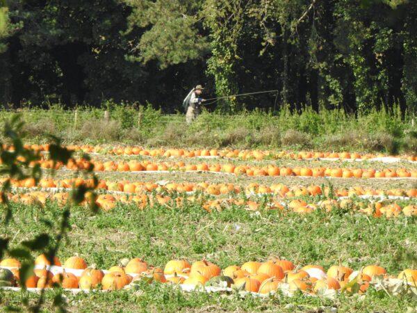 Pumpkin Fishing...