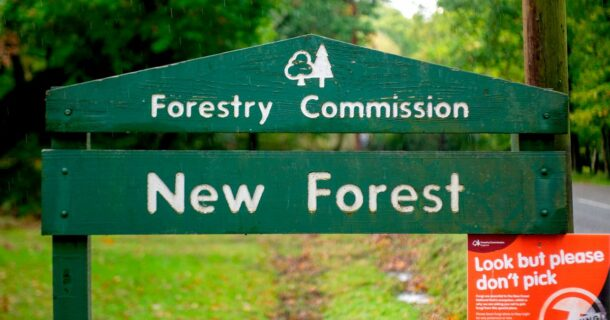 Meet The New Forest Local Election Candidates Vying For Your
